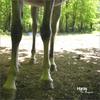 Pas de pieds, pas de cheval ;)