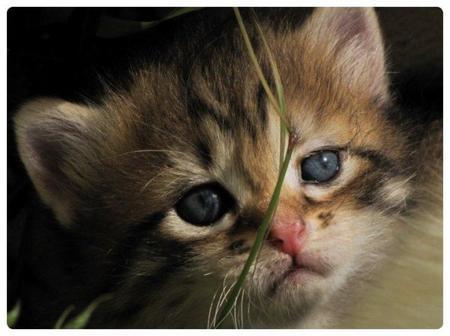 Le quel trouvée vous le plus beau, Pour le chat voté 1   & pour le chien voté 2.  & Pour les deux voté 3