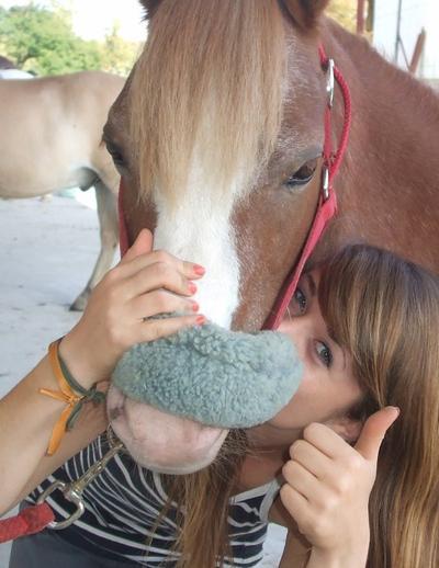 """""""Le cheval, comme chacun le sait, est la partie la plus importante du cavalier."""""""