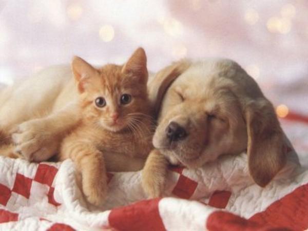 chien et chat blog de mimi chiots. Black Bedroom Furniture Sets. Home Design Ideas