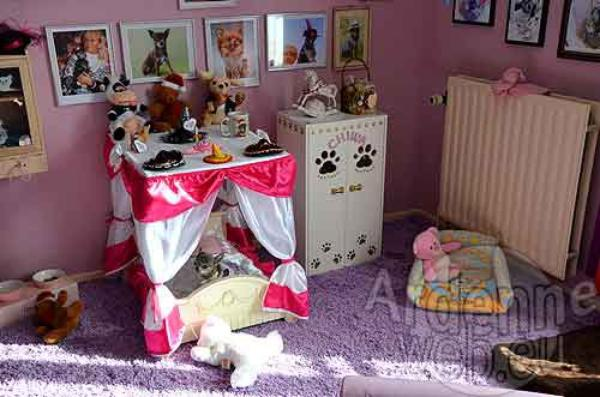 bienvenu chez miss chiwa la star canine de belgique luxury dogs. Black Bedroom Furniture Sets. Home Design Ideas