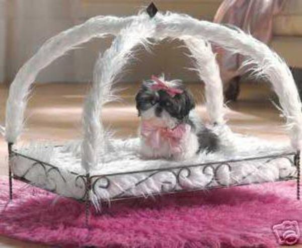 blog de luxury dogs luxury dogs. Black Bedroom Furniture Sets. Home Design Ideas
