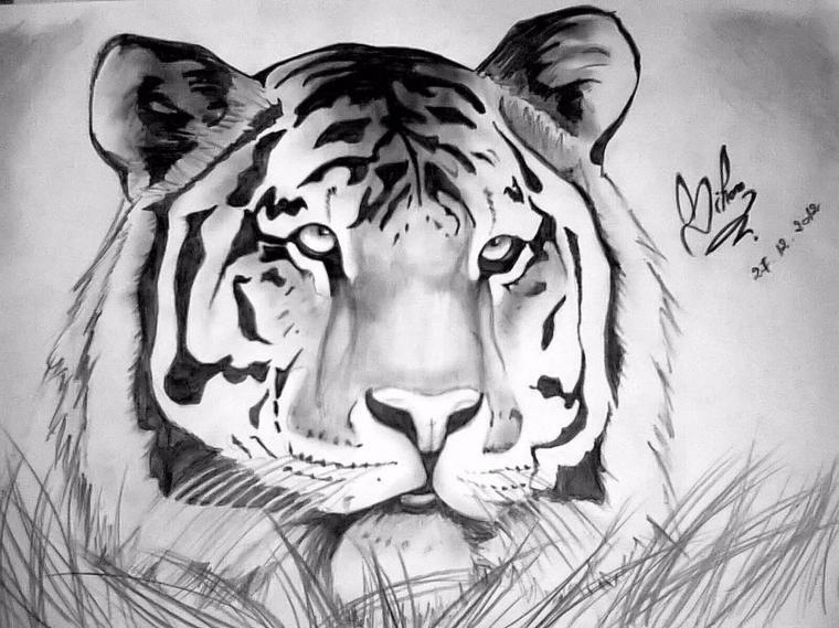 Dessin Tigre Dessin Fait Par Siham Bouyerbou