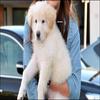 * Que pensez-vous de Mate, le nouveau chien de Miley ? Mieux que Sophie ? *
