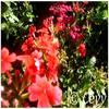 Article XXXXV° : Le Jardin.