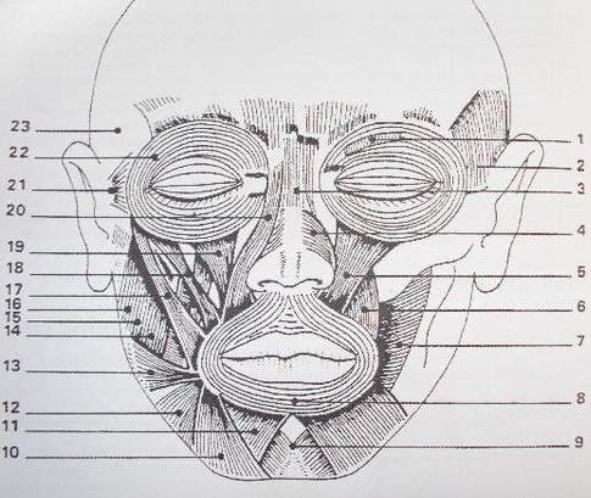 Les muscles du visage vus par Paul Ekman