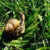 Yes, it's a snail x)
