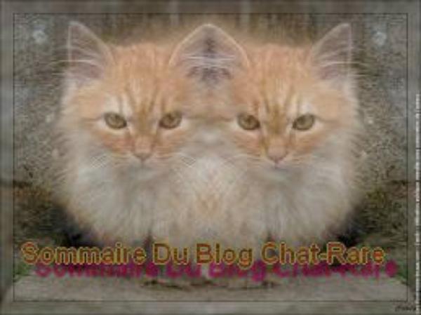 Sommaire Du Blog Chat-Rare