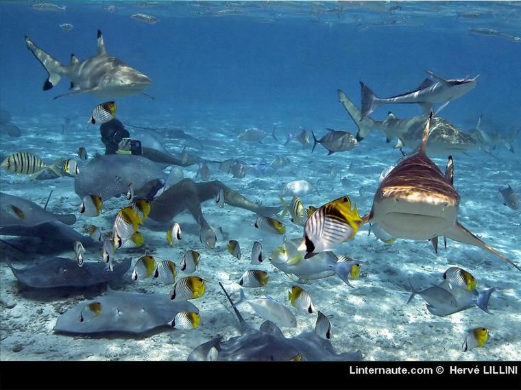 Articles De Gael761 Taggés Requins Les Seigneurs Des