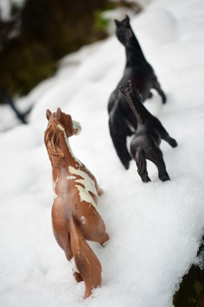 Sabots dans la neige partie 1