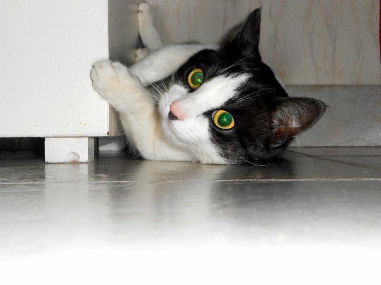 Les rêves d'un chat sont peuplés de souris !