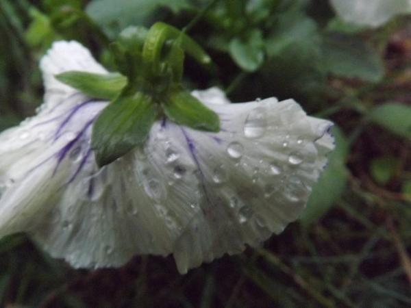 La nature & la pluie ....