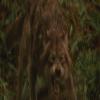 jacob en loup