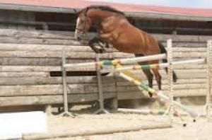 par ce que l'equitation ce n'est pas qu'un sport