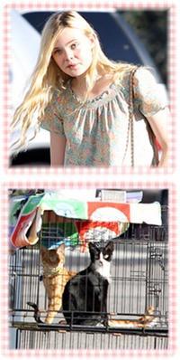 Candids ► 03.09.11, Santa Monica  ~ Elle a été aperçu en compagnie d'une amie, et des chats, en train de faire du shopping. Toute le monde ne connait pas la rentrée scolaire, n'est-ce pas Elle? ;)