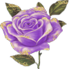 fleur mauve 5