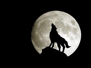 L'homme loup chapitre 1