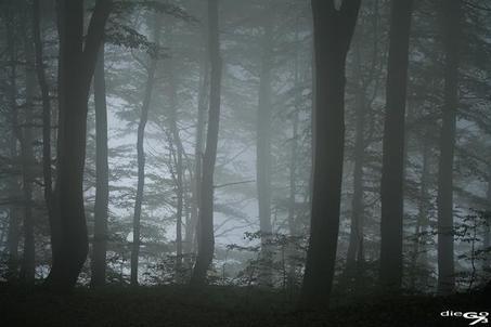 La forêt maudite: fiche technique