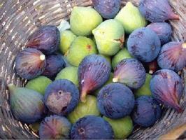 NUTRICIÓN: BREVAS. Ficus Carica, Artículo de Mª Luz Diez para la AMZ