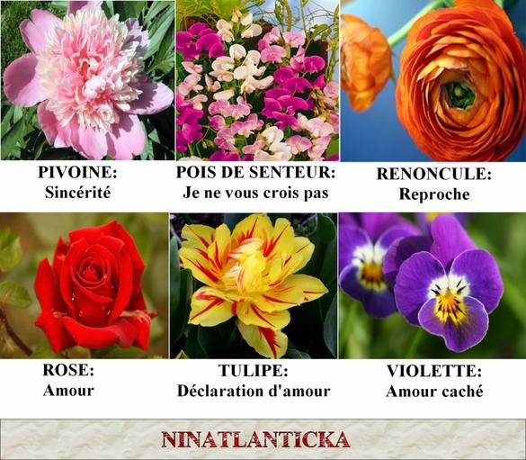 Le langage des fleurs ninatlanticka - Langage des fleurs iris ...