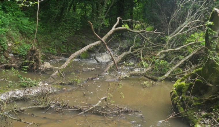 Samedi 10 Novembre 2012 : Entretien de cours d'eau
