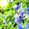#4 Mireille l'abeille :) !