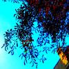 #7 Juste des feuilles, un ciel et c'est tout