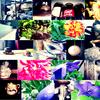------------------------------------ La Photographie une passion parmis tant d'autres   ------------------------------ ---------------Coporight Alice ne pas prendre sans autorisations