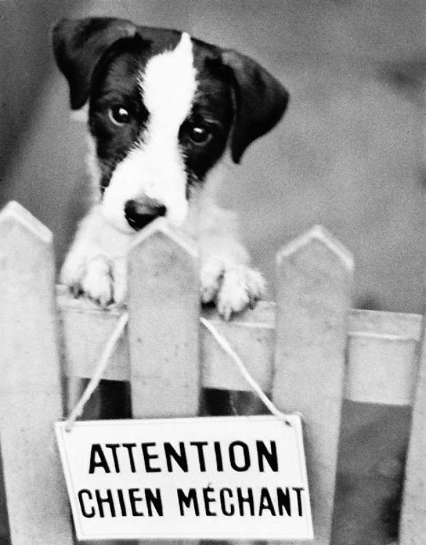 Petit chien = Canis Minor