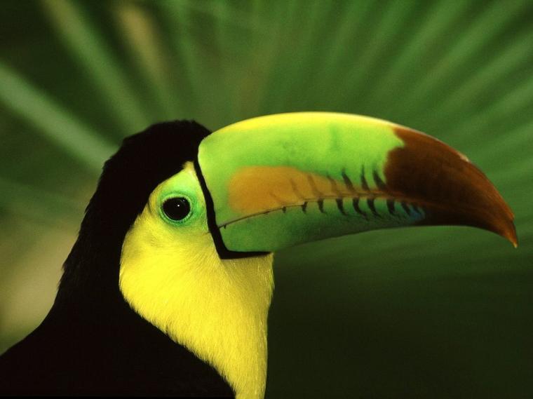 Toucan = Tucana