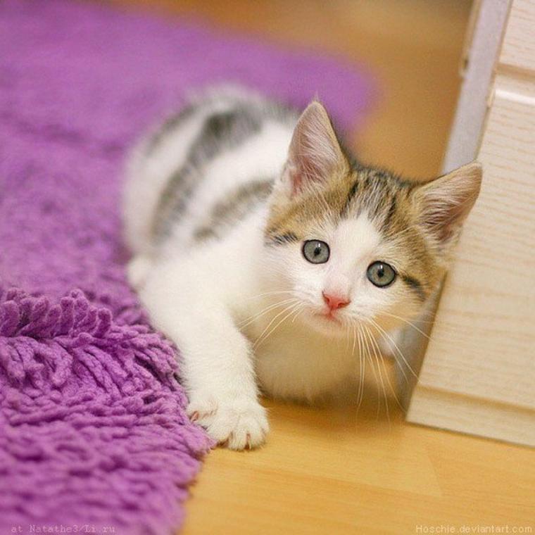 le chat le plus mignon du monde les animaux de catxlikex. Black Bedroom Furniture Sets. Home Design Ideas