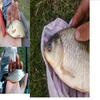 quel que modele de poisson fait( j'en est fait 100teine autre)