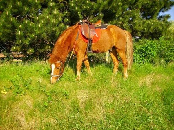 Présentation de nos chevaux. ♥