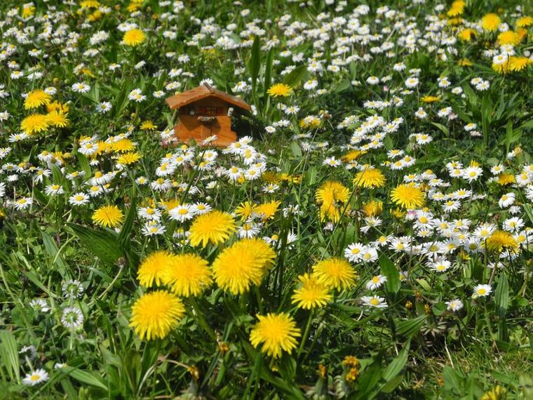 Fleurs et giboulées (fin)