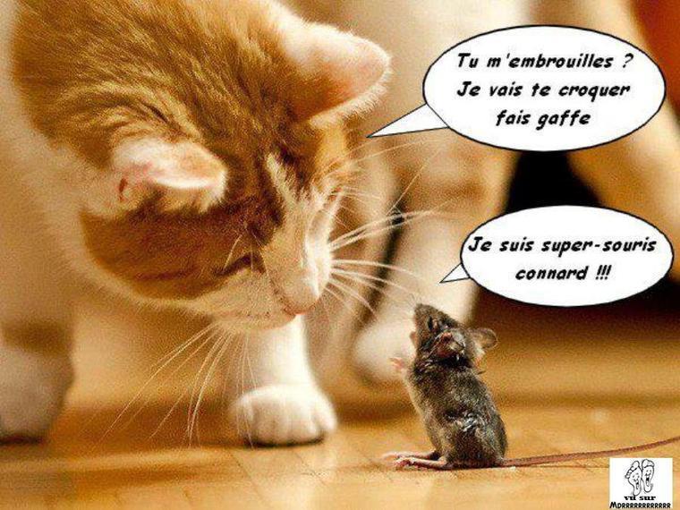 Une souris entrain d'insulter un chat !