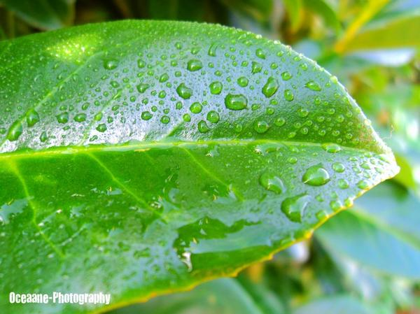 The morning dew.