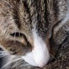 ___________photo prise par moi, de mon cher & tendre petit bout de chat ♥ il existe deux moyens d'oublier les tracas de la vie : la musique, et les chats.