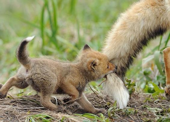 Parental Love!