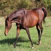 mon cheval dans son pré