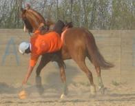 Extrai de Horse-ball