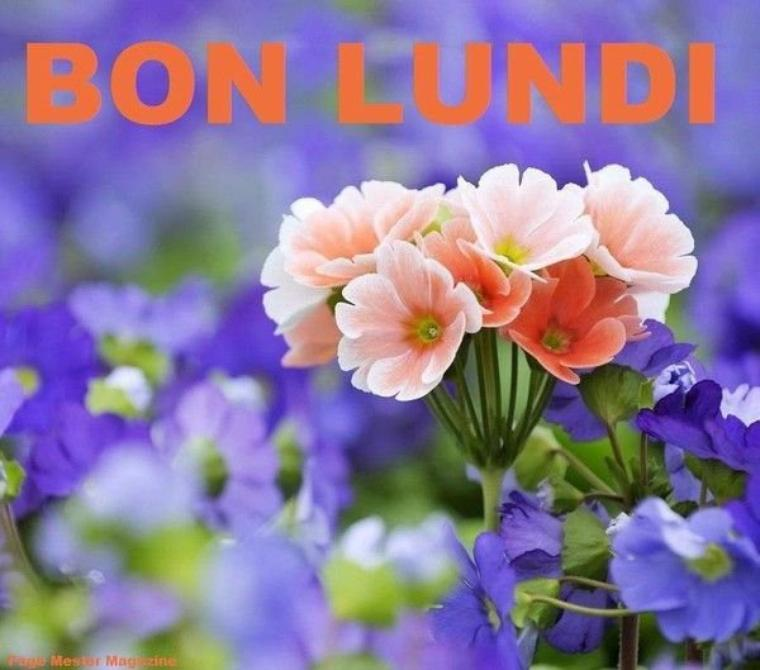 BONJOUR MES AMIS NOUS  SOMMES LE  LUNDI  11 OCTOBRE  2021 C EST LA  ST FIRMIN  BONNE FETE  A  TOUS LES  FIRMIN