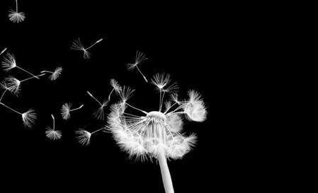 L'amitié est forte, mais parfois fragile.. comme un picenlie, quand tu souffle trop fort, il s'envole et s'éparpille, sans jamais revenir ...