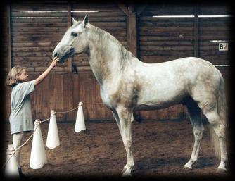 """""""le cheval est pour l'homme comme les ailes d'un oiseau''"""