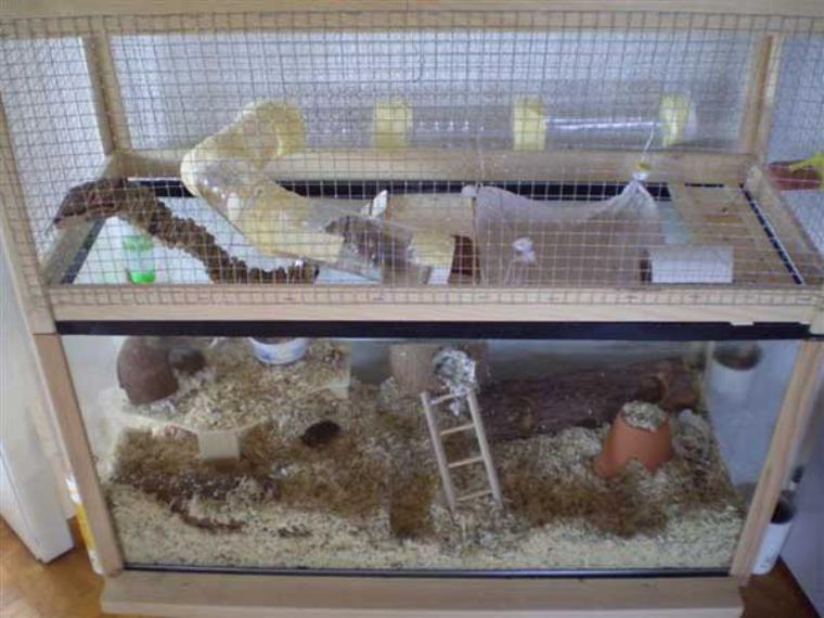 La cage des gerbilles l 39 incontournables pour les leveur d 39 hamsters - La plus grande cage a hamster du monde ...