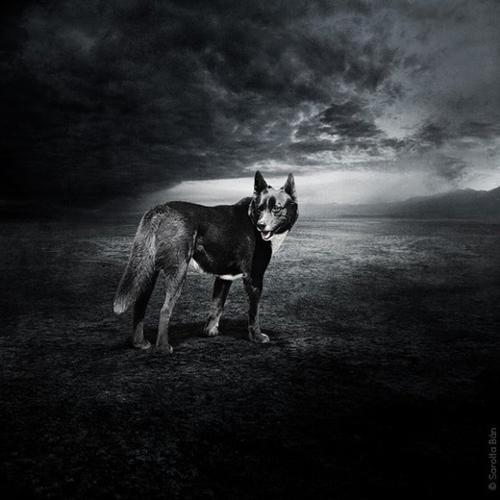 Des images surréalistes pour des animaux à adopter