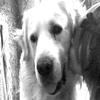 Si tu le tues , tu me perds , & tu me tues ,, C'est ma vie mon chien ! On se comprend Petite Soeur & Obel'  Je t'aiime «3