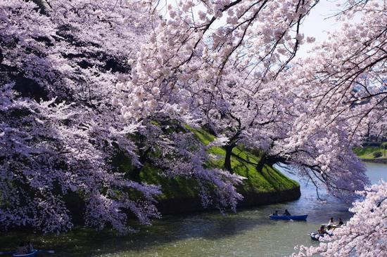 Culture Japon : Les saisons