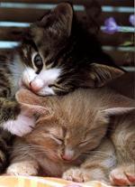 voici un petit quizz sur les chats