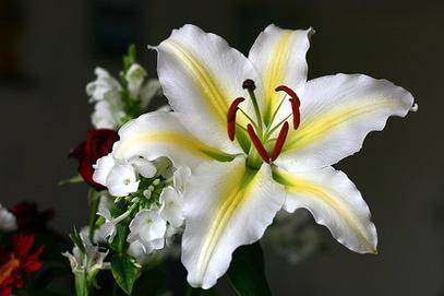 les bienfaits de la fleur de lys astuces d 39 antan les rem des de m m. Black Bedroom Furniture Sets. Home Design Ideas
