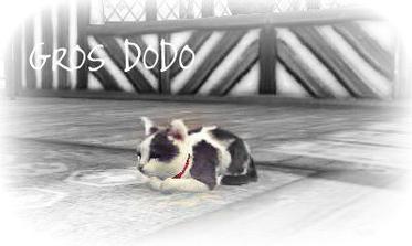 Les coin des chats ♥